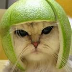 Котка-космонавт с каска