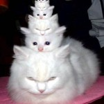 Котки - матрьошки