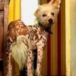 Кученцето Мими - сладурана