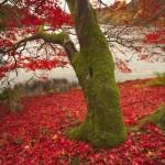Снимка на есенно дърво