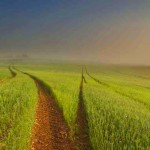 Природна фотография на зелено поле