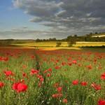 Снимка на поле с цветя